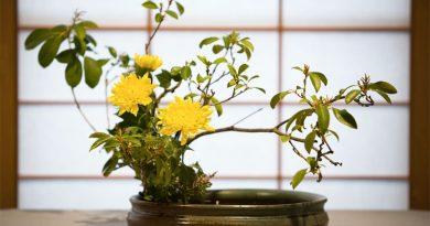 Flower Arrangement, Floral Arrangements