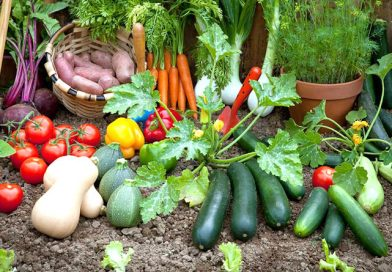 Vegetable Gardening and Safe Pest Control Tips
