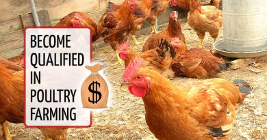 Profiting from Layers, Boilers and Turkey In Poultry Farming
